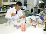 試験室検査(微生物検査)