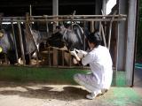 乳牛の診療(NOSAI)