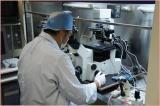 受精卵移植研究
