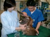 野生動物救護