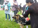 救助犬の実演