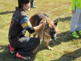 警察犬の様子
